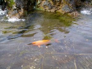 kosicka-fontana-zverokruh-ryby (3)